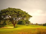 Prestige Golfshire - Trees across the Golf Course